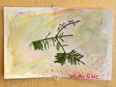 16-03-02 Drawn to Nature Conifer Leaf