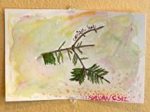 16-03-02 Drawn to Nature Conifer Leaf