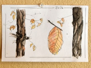 16-03-02 Drawn to Nature Leaf